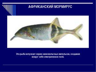 АФРИКАНСКИЙ МОРМИРУС Эта рыба испускает серию низковольтных импульсов, создав
