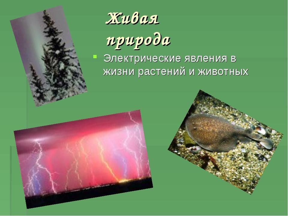 Живая природа Электрические явления в жизни растений и животных