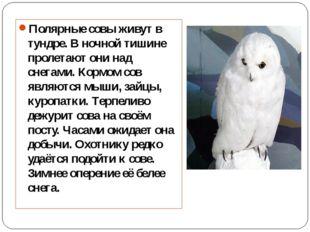 Полярные совы живут в тундре. В ночной тишине пролетают они над снегами. Корм