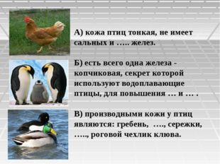 А) кожа птиц тонкая, не имеет сальных и ….. желез. Б) есть всего одна железа