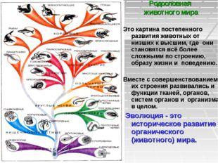 Родословная животного мира Это картина постепенного развития животных от низш