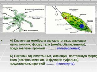 А) Клеточная мембрана одноклеточных, имеющих непостоянную форму тела (амеба о