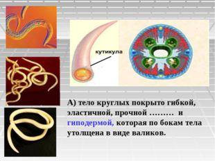 А) тело круглых покрыто гибкой, эластичной, прочной ……… и гиподермой, которая