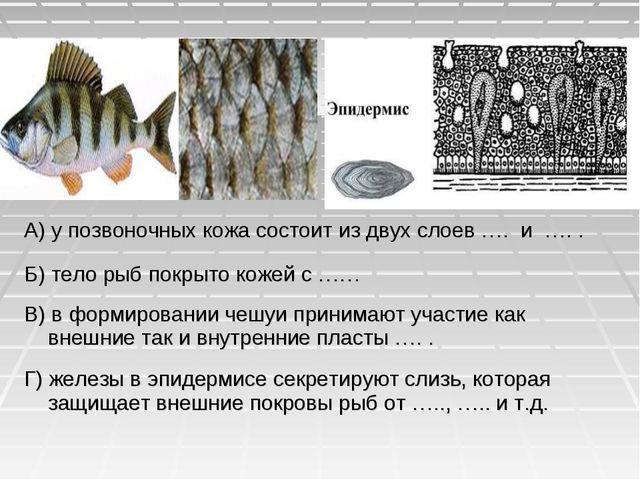 А) у позвоночных кожа состоит из двух слоев …. и …. . Б) тело рыб покрыто кож...