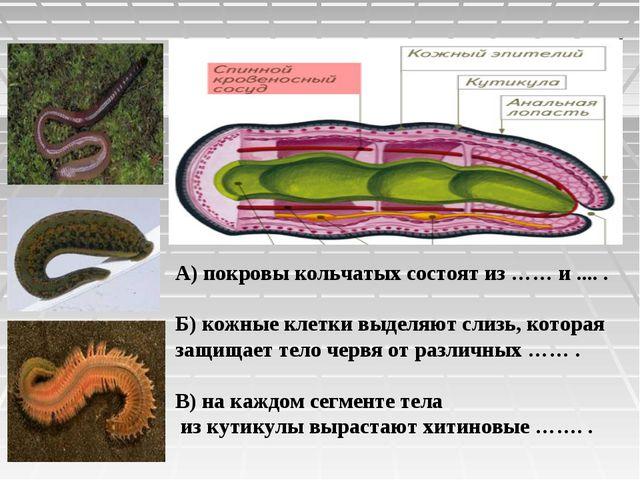 А) покровы кольчатых состоят из …… и .... . Б) кожные клетки выделяют слизь,...