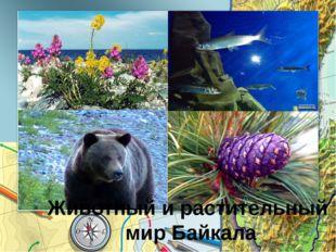 Шестое чудо Животный и растительный мир Байкала