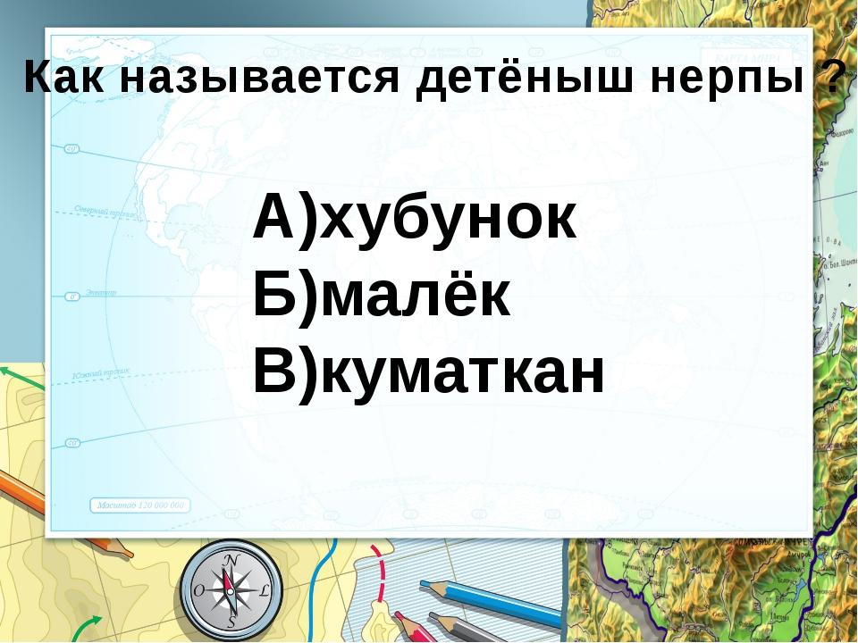 Байкальский заповедник олень
