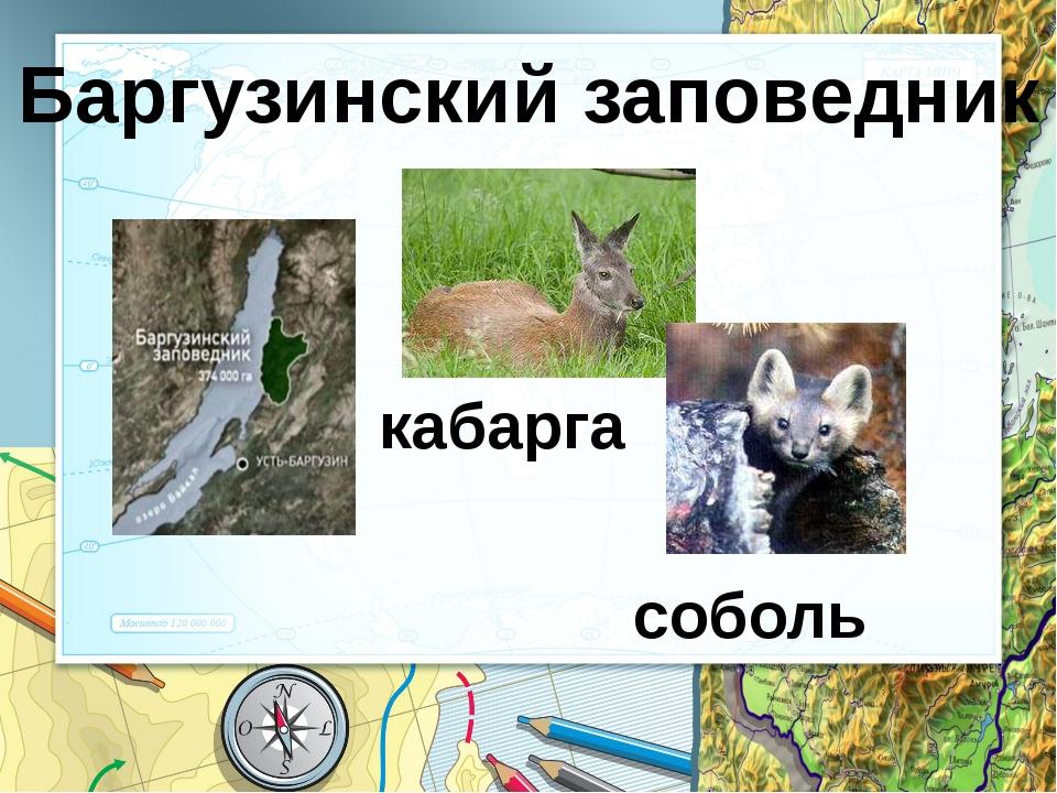 Презентацию подготовила Авдохина Инна Сергеевна, Библиотекарь МБОУ «СОШ № 12»...