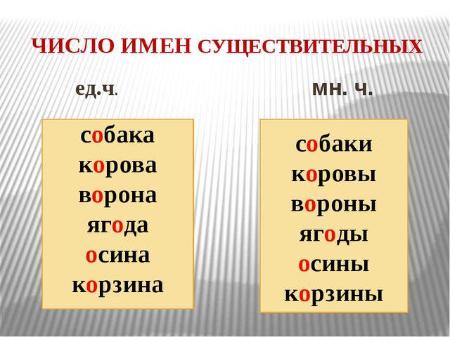 Разработка по русскому языку на тему число имен сущ-х 3 класс