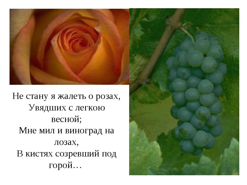 Не стану я жалеть о розах, Увядших с легкою весной; Мне мил и виноград на лоз...