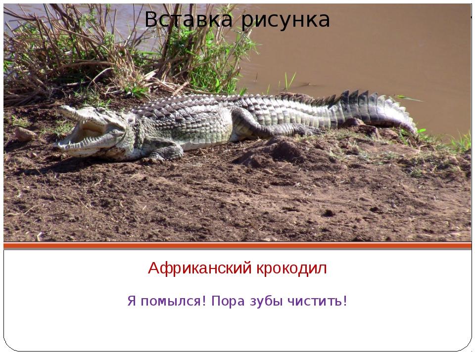 Африканский крокодил Я помылся! Пора зубы чистить!