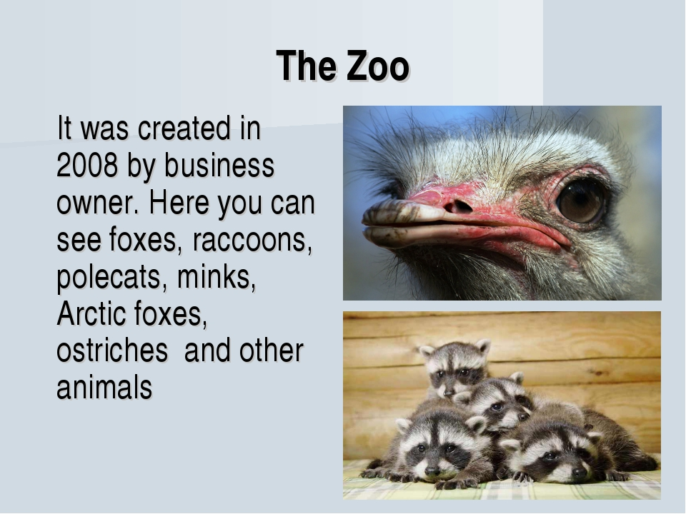 The Zoo It was created in 2008 by business owner. Here you can see foxes, ra...