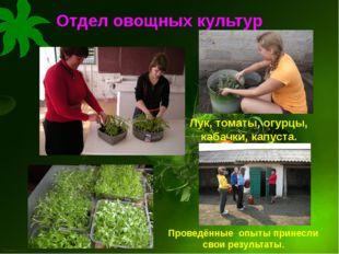 Отдел овощных культур Проведённые опыты принесли свои результаты. Лук, томаты
