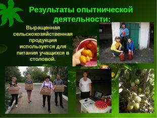 Результаты опытнической деятельности: Выращенная сельскохозяйственная продукц