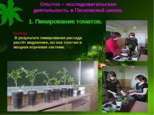 1. Пикирование томатов. Вывод: В результате пикирования рассада растёт медлен