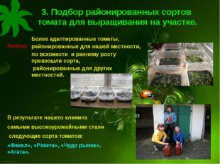 3. Подбор районированных сортов томата для выращивания на участке. Вывод: Бол