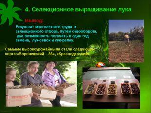 4. Селекционное выращивание лука. Вывод: Результат многолетнего труда и селек