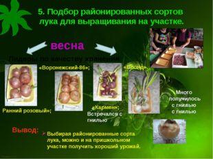 5. Подбор районированных сортов лука для выращивания на участке. Лидеры по ка