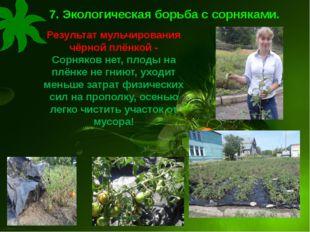 7. Экологическая борьба с сорняками. Результат мульчирования чёрной плёнкой -
