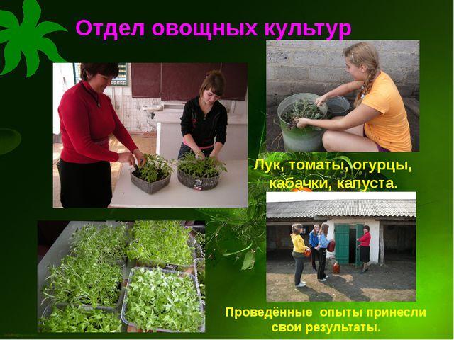 Отдел овощных культур Проведённые опыты принесли свои результаты. Лук, томаты...