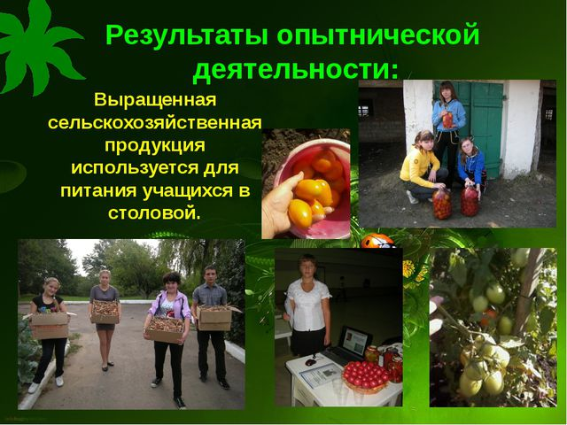 Результаты опытнической деятельности: Выращенная сельскохозяйственная продукц...