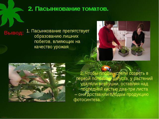. 2. Пасынкование томатов. Вывод: . 2. Чтобы плоды успели созреть в первой по...