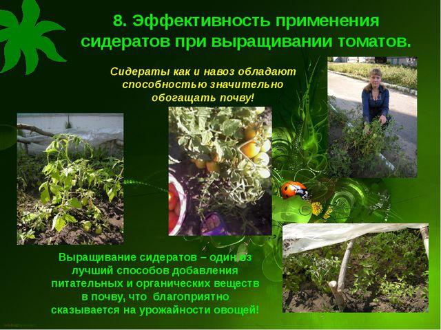 8. Эффективность применения сидератов при выращивании томатов. Сидераты как и...