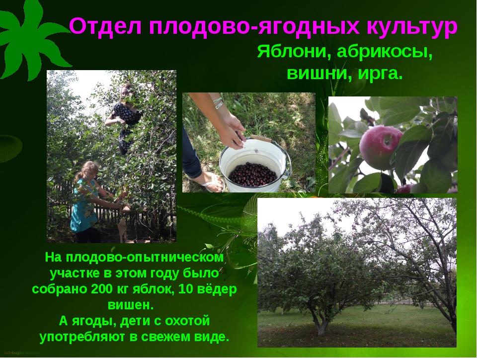 Отдел плодово-ягодных культур На плодово-опытническом участке в этом году был...