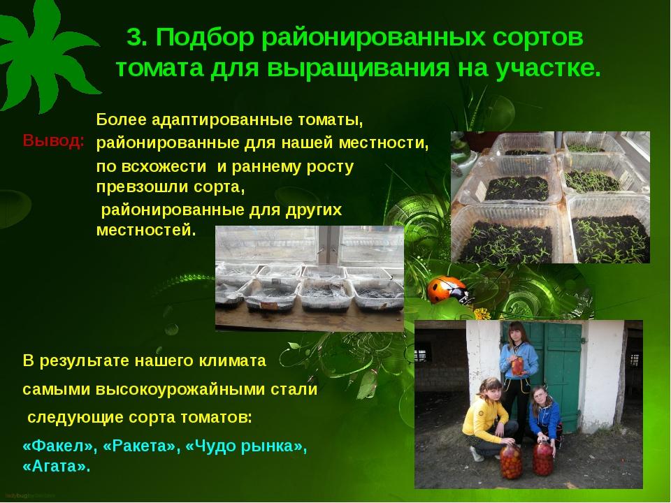 3. Подбор районированных сортов томата для выращивания на участке. Вывод: Бол...