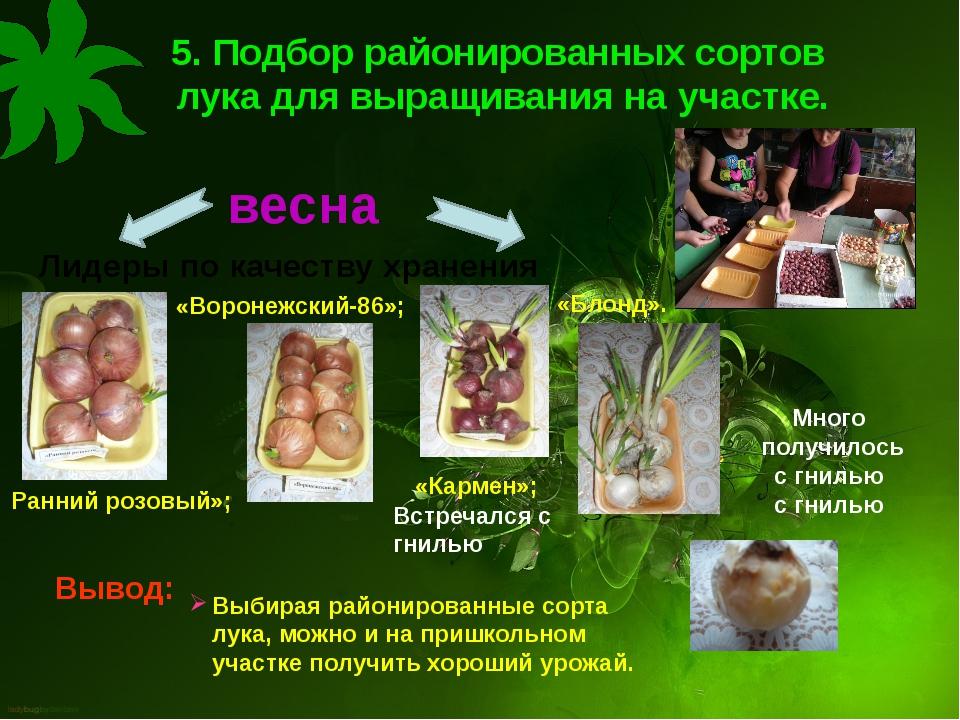 5. Подбор районированных сортов лука для выращивания на участке. Лидеры по ка...