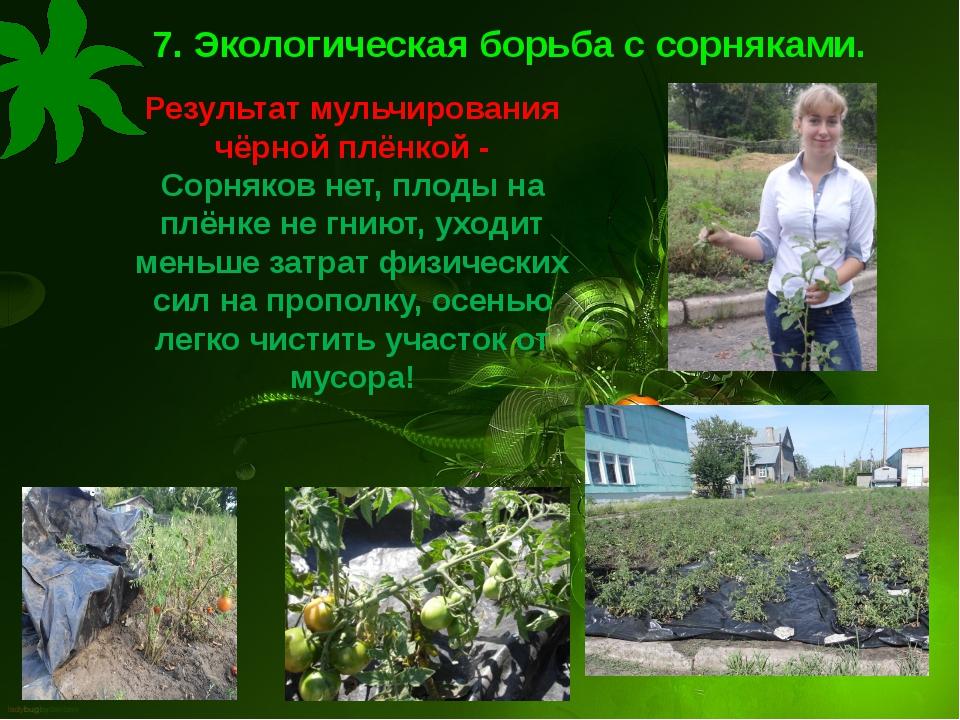 7. Экологическая борьба с сорняками. Результат мульчирования чёрной плёнкой -...