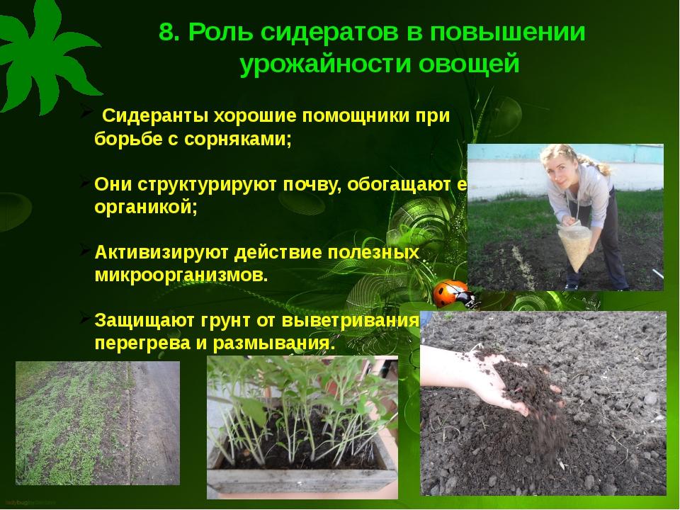 8. Роль сидератов в повышении урожайности овощей Сидеранты хорошие помощники...