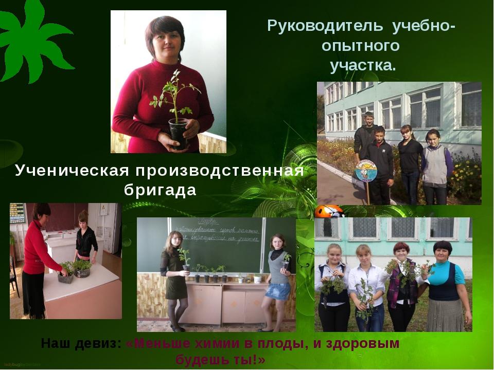 Ученическая производственная бригада Наш девиз: «Меньше химии в плоды, и здор...