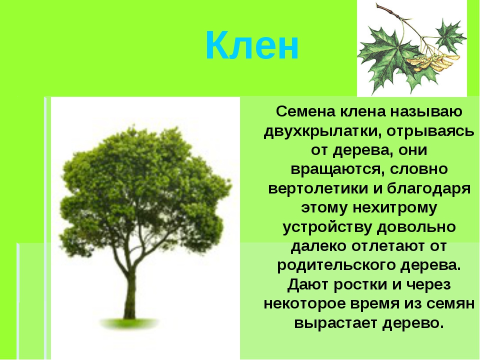Почему дерево называется деревом