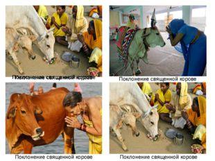 Поклонение священной корове Поклонение священной корове Поклонение священной