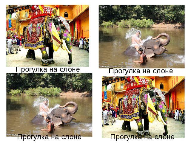 Прогулка на слоне Прогулка на слоне Прогулка на слоне Прогулка на слоне