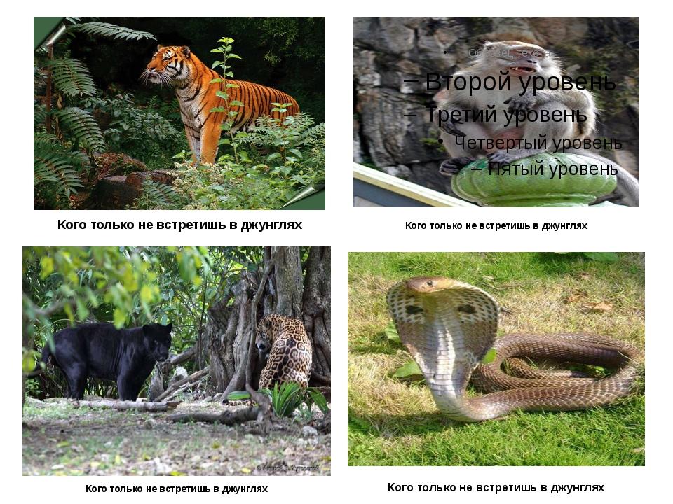 Кого только не встретишь в джунглях Кого только не встретишь в джунглях Кого...