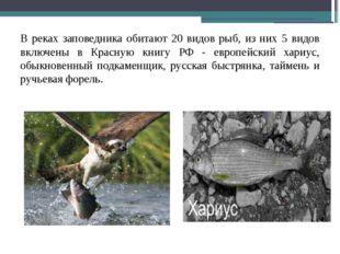 В реках заповедника обитают 20 видов рыб, из них 5 видов включены в Красную к