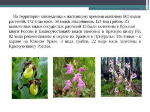 На территории заповедника к настоящему времени выявлено 665 видов растений,