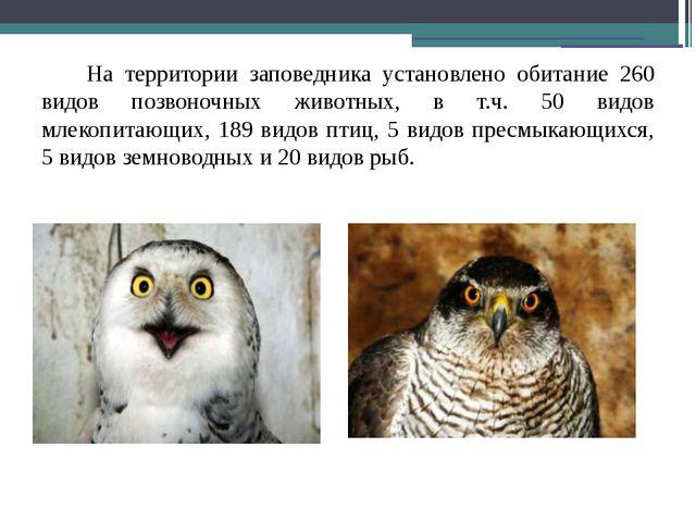 На территории заповедника установлено обитание 260 видов позвоночных животны...