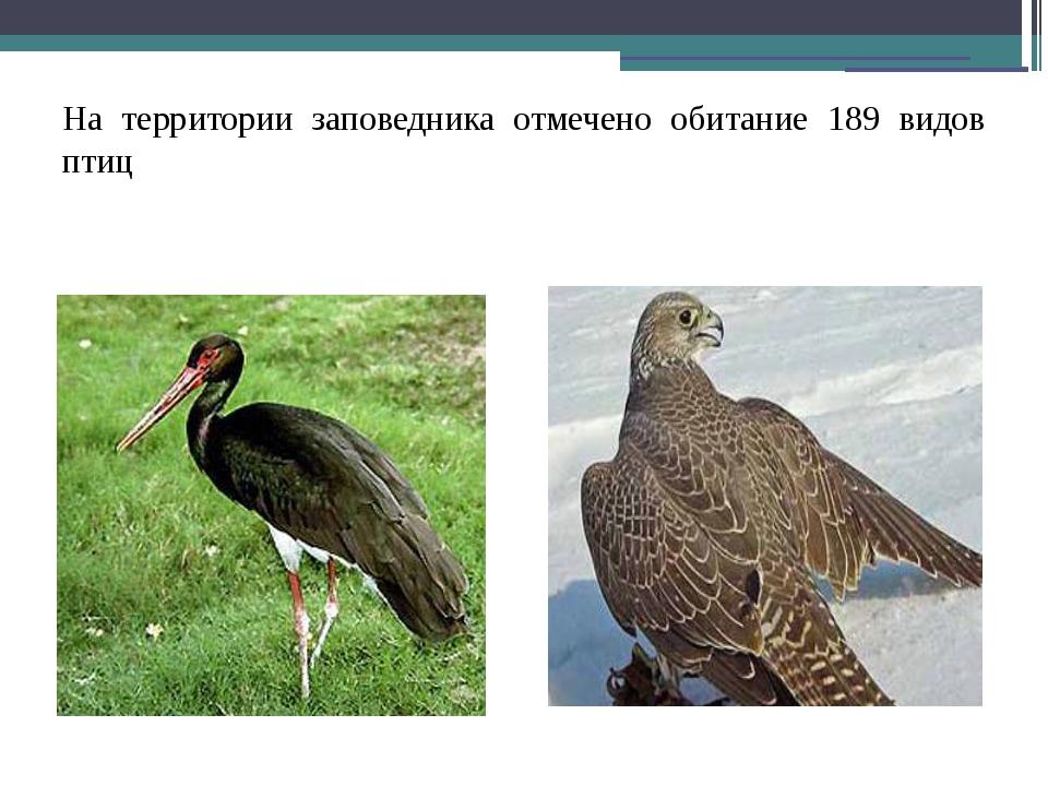 На территории заповедника отмечено обитание 189 видов птиц