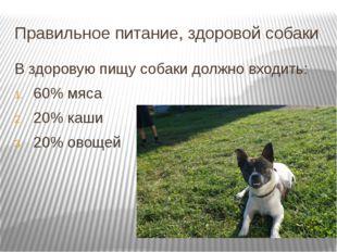 Правильное питание, здоровой собаки В здоровую пищу собаки должно входить: 60