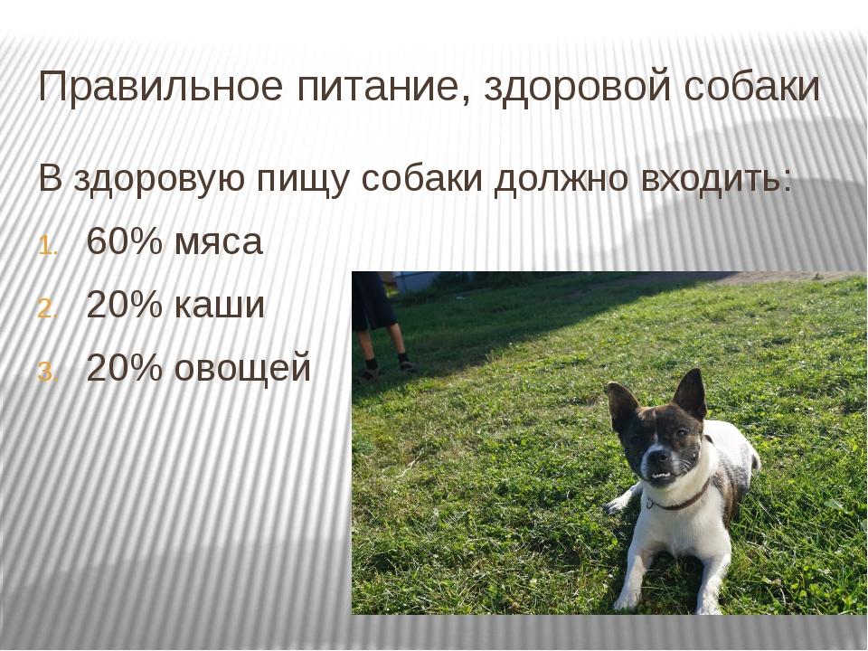 Правильное питание, здоровой собаки В здоровую пищу собаки должно входить: 60...