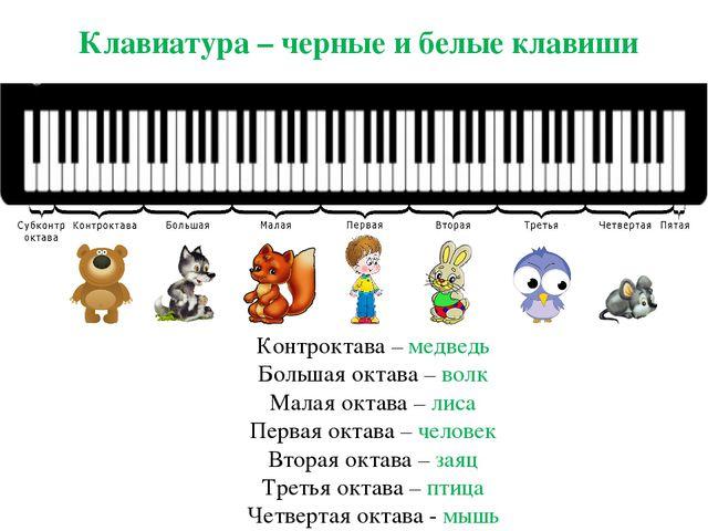 Клавиатура – черные и белые клавиши Контроктава – медведь Большая октава – во...
