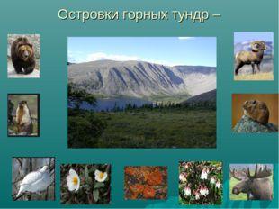 Островки горных тундр –