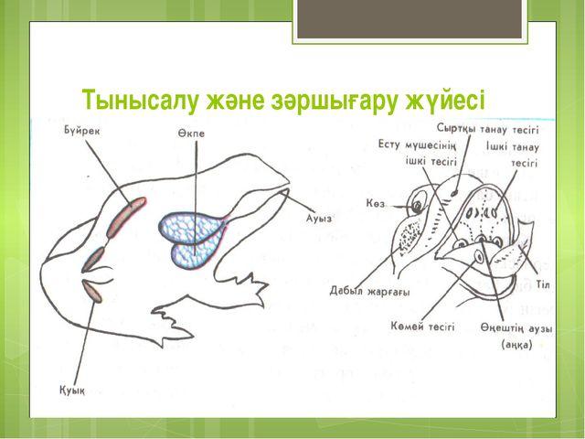 Тынысалу және зәршығару жүйесі