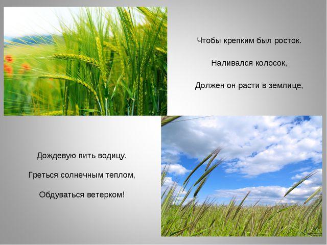 Чтобы крепким был росток. Наливался колосок, Должен он расти в землице, Дожд...