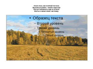 Около леса, как в мягкой постели, Выспаться можно - покой и простор! Листья