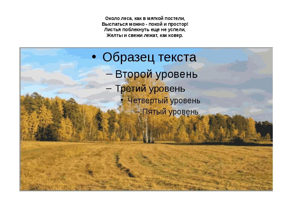 Около леса, как в мягкой постели, Выспаться можно - покой и простор! Листья...