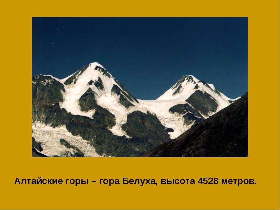 Алтайские горы – гора Белуха, высота 4528 метров.